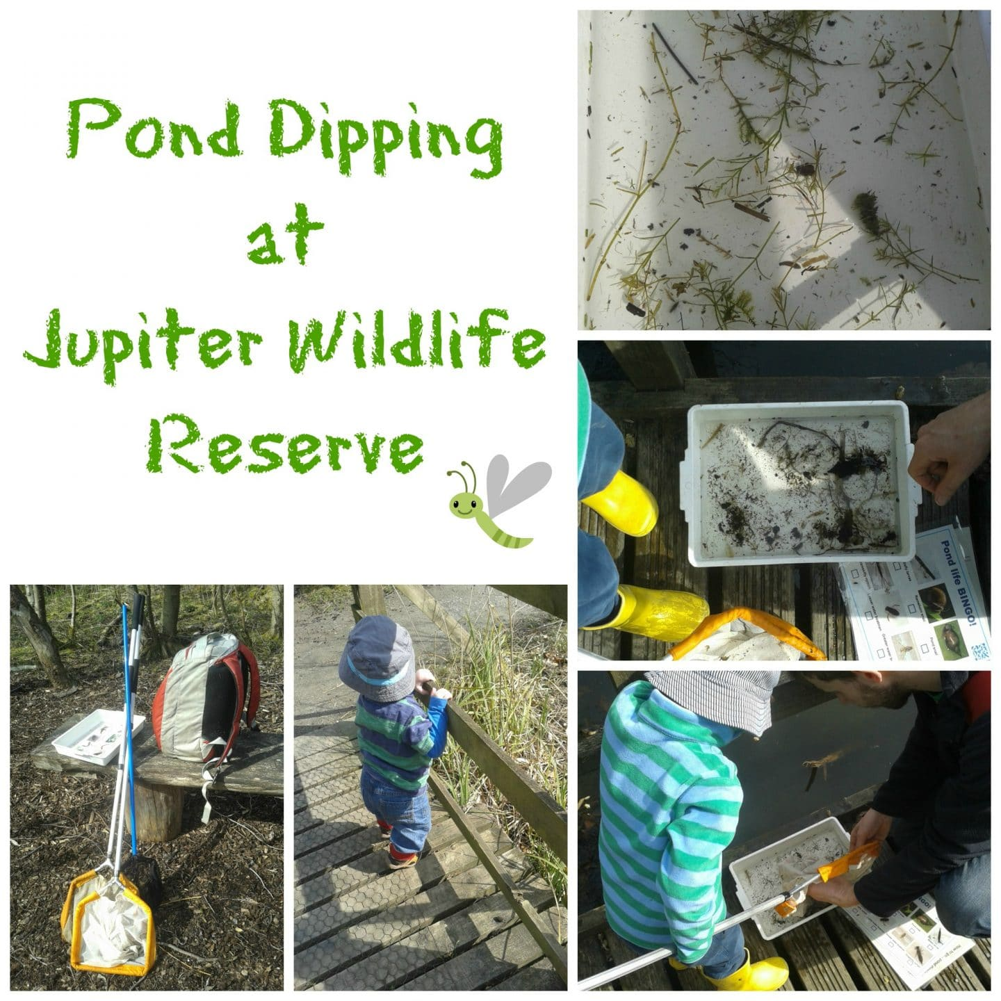 Pond Dipping at Jupiter SWT Site