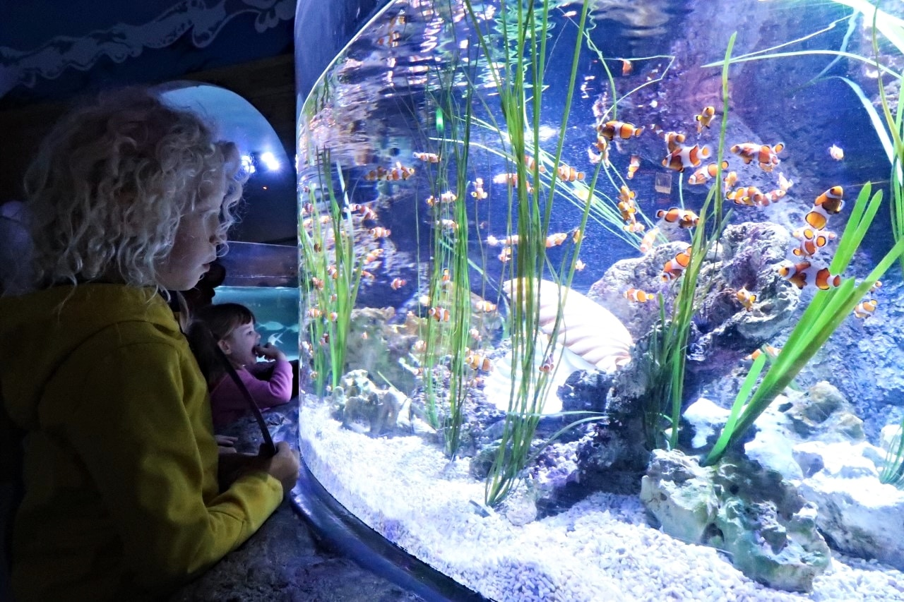 child looking at fish in aquarium