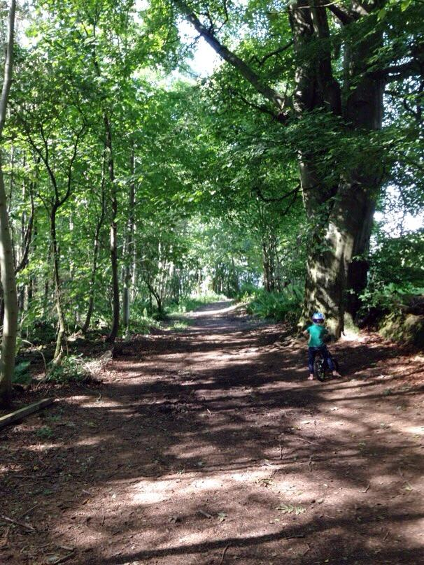 10 activities to explore the forest