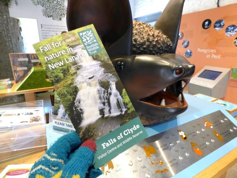 falls of the clyde visitor centre