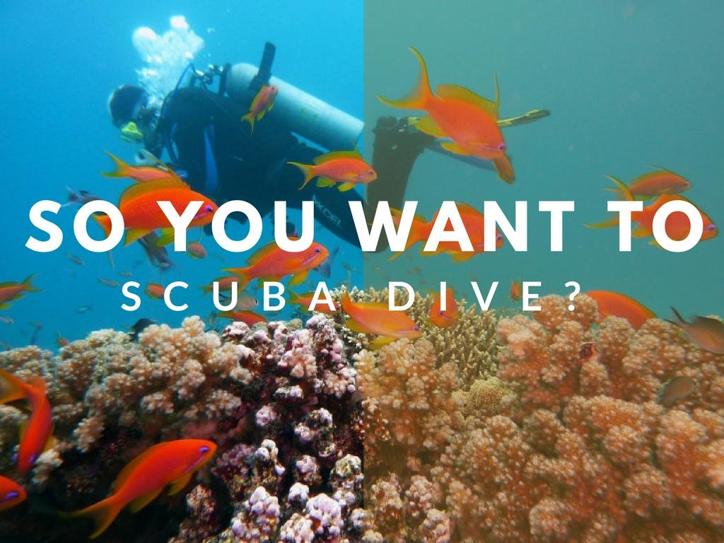 So You Want To Learn To Scuba Dive?