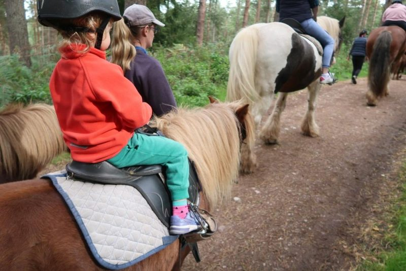 Whinfell Forest pony trek