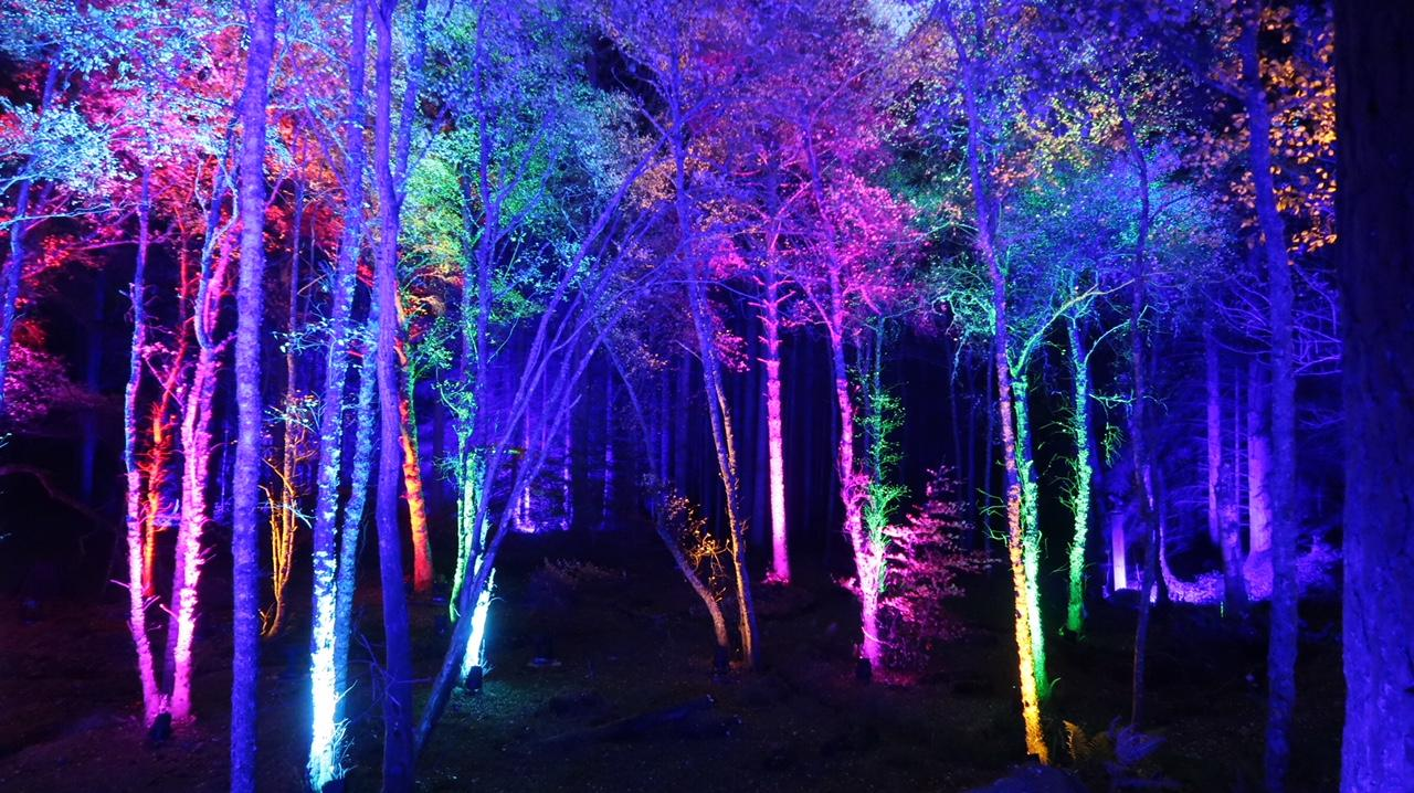 forest lit up in colours