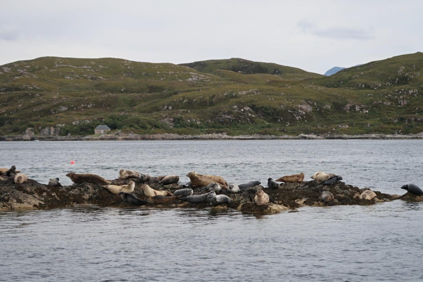 travel Scotland seal and whale watching