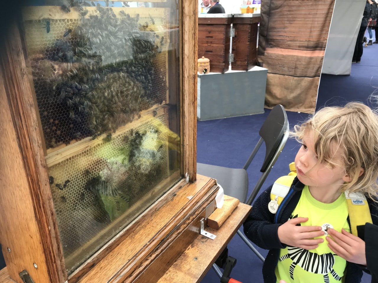 looking at bees in a glass hive