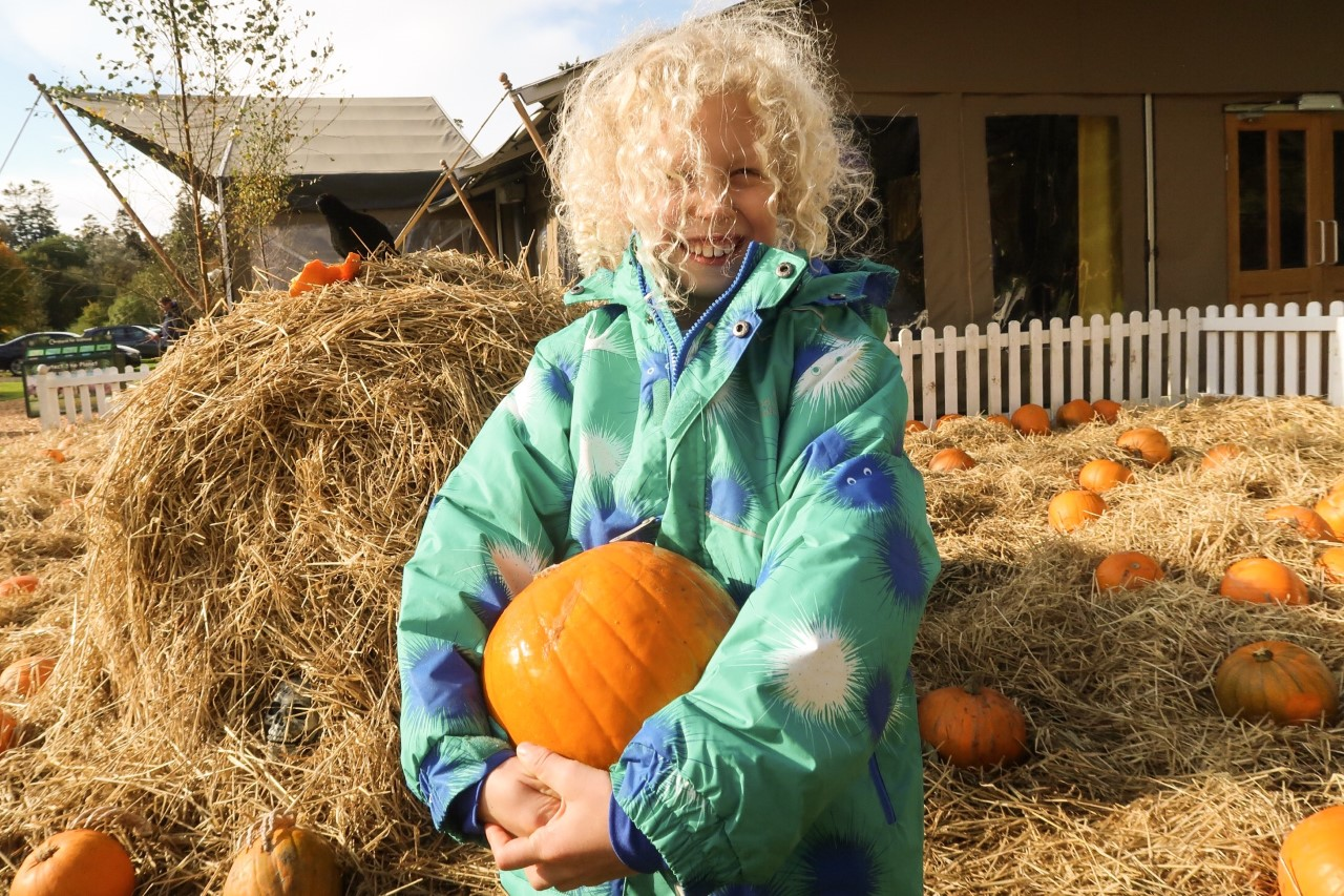 pumpkin patch with child holding a pumpkin