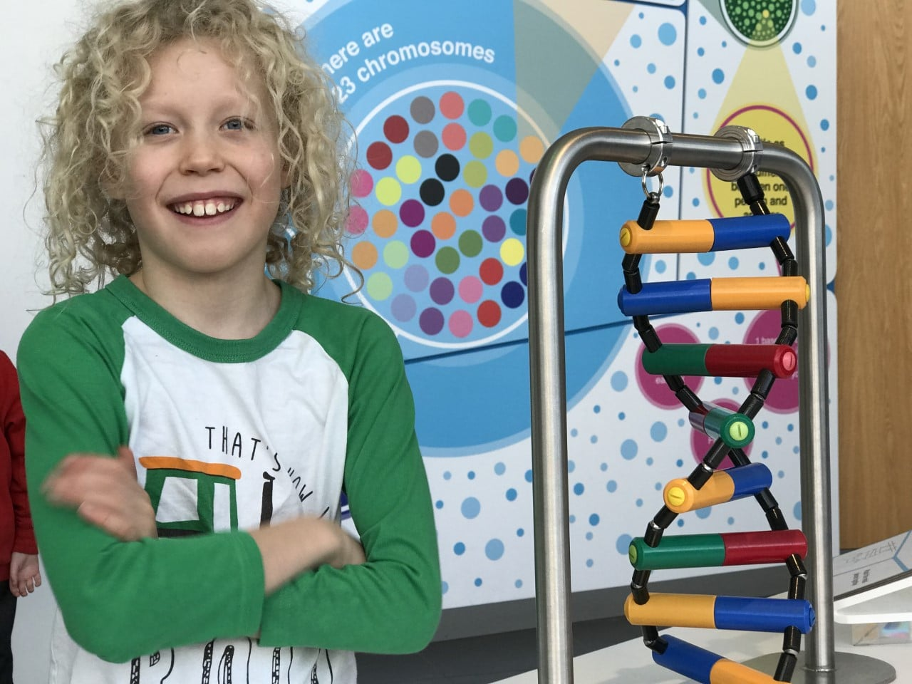 child standing beside DNA model