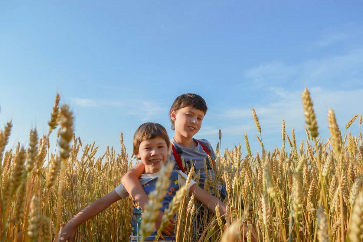 children in wheat field