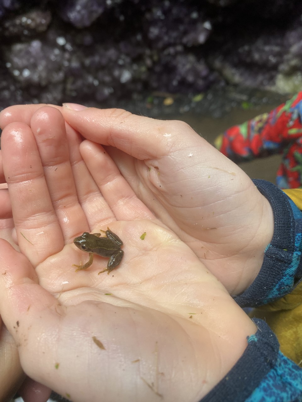 tiny frog in child's hands