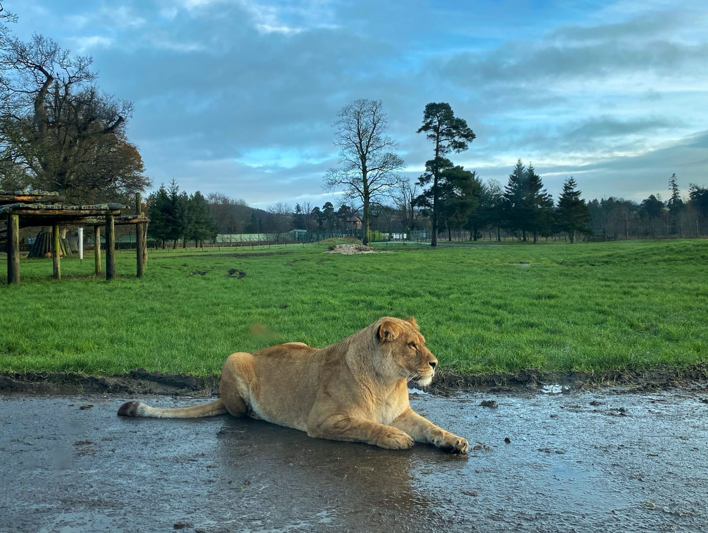 Blairdrummond safari park
