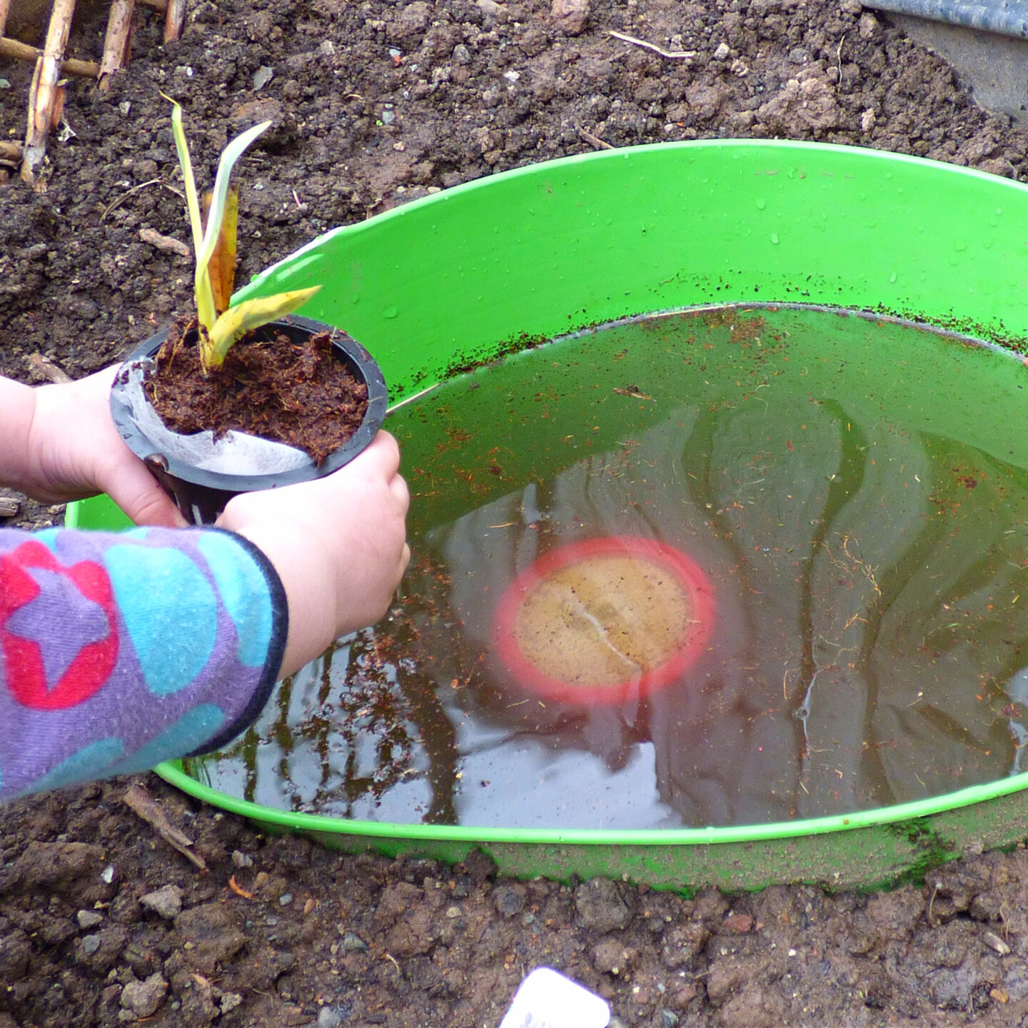 child putting a plant in a container pond
