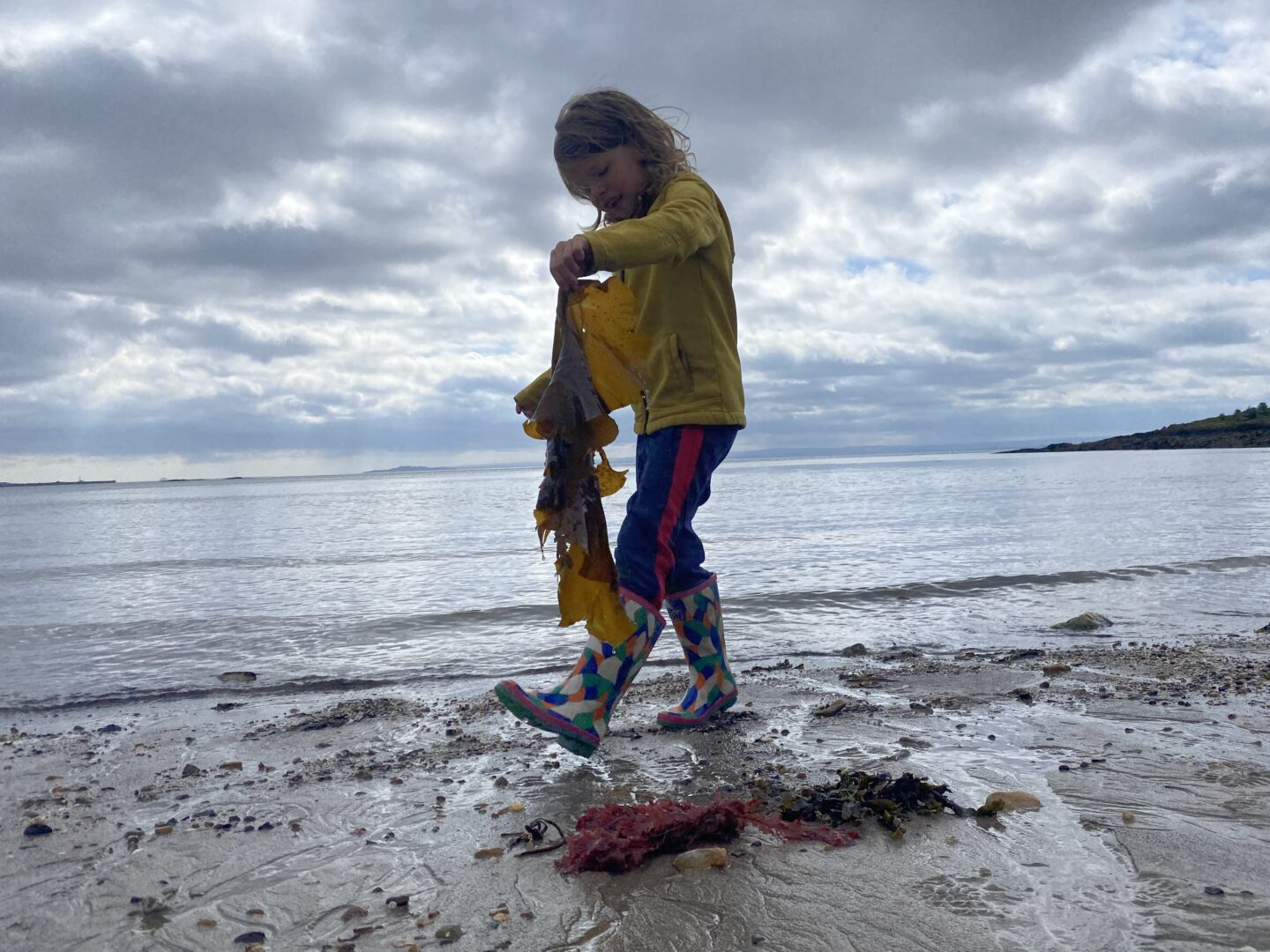 a child comparing different seaweeds on the beach