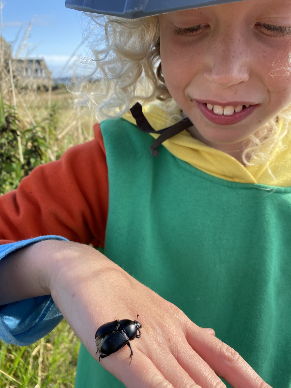 child staring at a beetle on his hand
